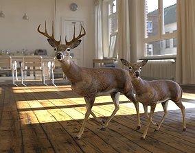 model 3D model deer animated