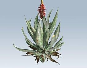Aloe vera 3D model
