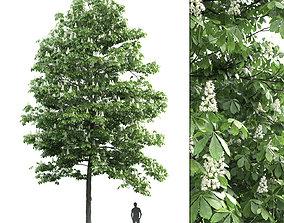 3D model Chestnut-tree 03 H13m