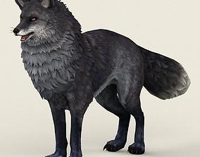 3D asset Game Ready Black Fox
