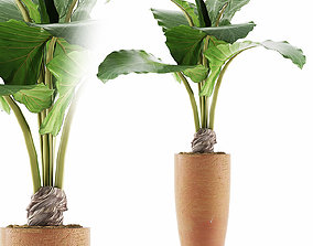 3D Plants Collection 53 trees