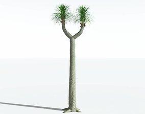 EVERYPlant Compact-Leafed Sigillaria SINGLE --1 Model-- 3D