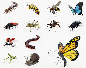 Insect Collection Rigged FULL 3D model
