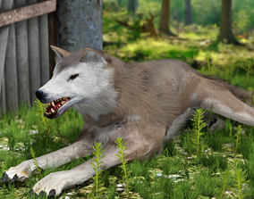 3D asset Brown Wolf Animated game ready with fur