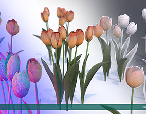 3D asset Tulips very LOW POLY detailed textures 63