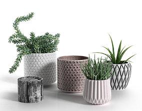 3D Pots with Donkey s Tail and Aloe Vera