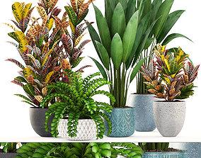 3D model Collection plants variegatum