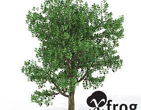 3D XfrogPlants Plum