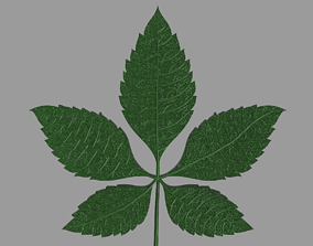3D print model Chestnut Leaf