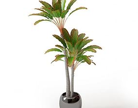 Leafy Palm Trees In A Pot 3D