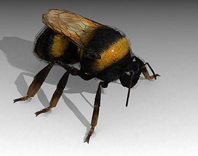 3D asset animated Bumblebee