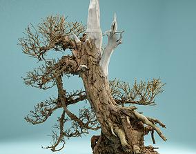RAW SCAN Dead Bonsai Tree High Poly 03 3D