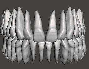 Real human teeth anatomy maxillary and 3D print model 1