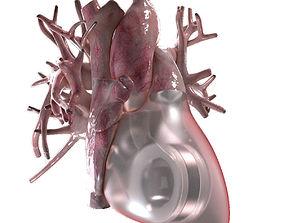 3D model Artificial Human Heart Beating