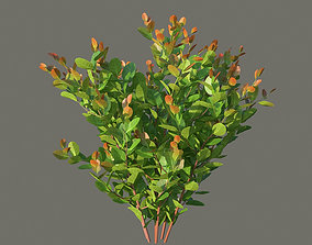 3D model XfrogPlants Cocoplum - Chrysobalanus Icaco