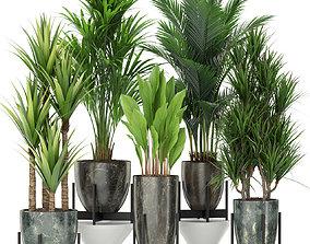 Plants collection 381 3D model
