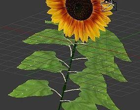 flora Sunflower 3D