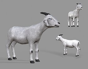 3D asset realtime White Goat