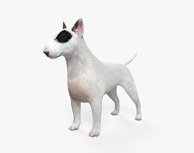 3D Bull Terrier HD