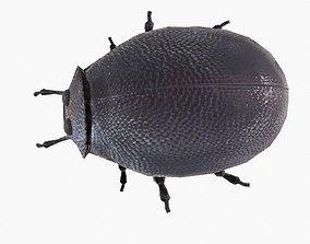 Rigged Bug 3D asset