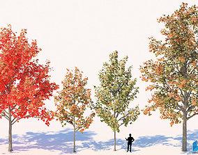 3D model Acer Rubrum Trees