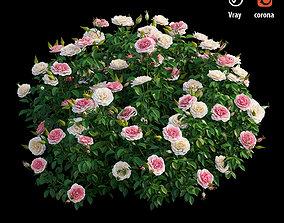 Rose plant set 26 3D model