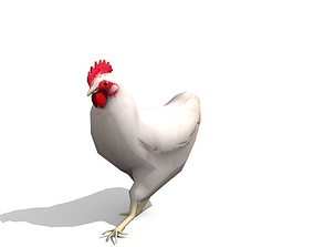 3D asset White Chicken - Animated