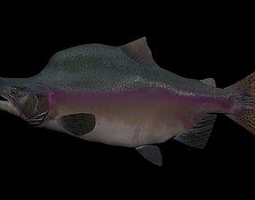 Pink Salmon 3D