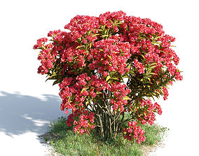 3D model Lagerstroemia indica 34 am154