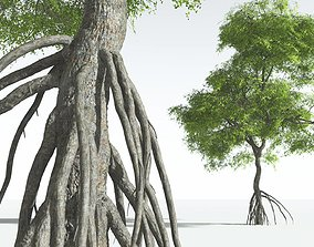 EVERYPlant Red Mangrove 03 --15 Models-- 3D