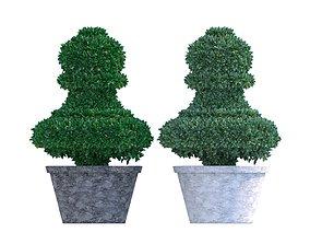Bush plant - boxwood 3D asset