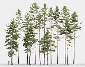 3D Pinus Sylvestris Pack 01
