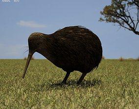 3D model Kiwi Apteryx Australis