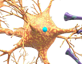Blood-brain barrier 3D