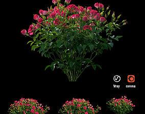 3D Plant rose set 02