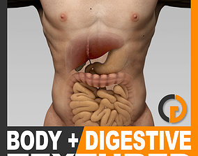 3D model Human Male Body and Digestive System Textured -