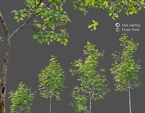 3D model Oak sapling