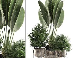 Decorative plants in flower pots for 3D model 2