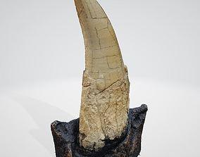 Tooth Tyrannosaurus rex of original 3D scan ready to 1