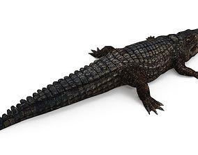 Crocodile 3D asset