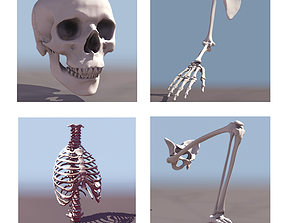Human Skeleton Collection 3D model