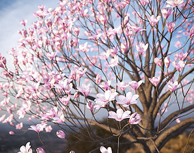 3D XfrogPlants Saucer Magnolia - Magnolia Soulangeana