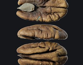 Pecan seed 3D model