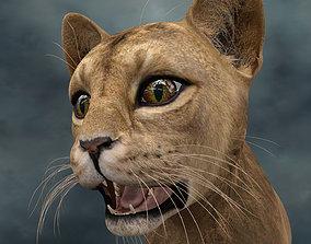 UVWC-014 Cat Textures Only 3D model