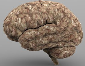 Brain with Interior and Texture 3D