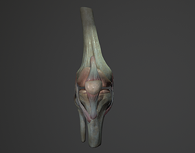 Low poly knee joint model game-ready