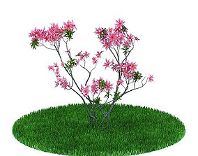 Shrub With Pink Flowers 3D