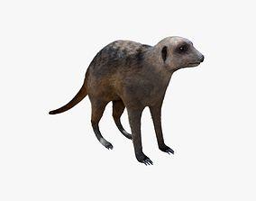 meerkat Fur 3D asset