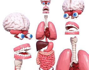 3D model low-poly Internal Organs Low Poly