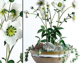 3D Hellebores and succulents in bowl